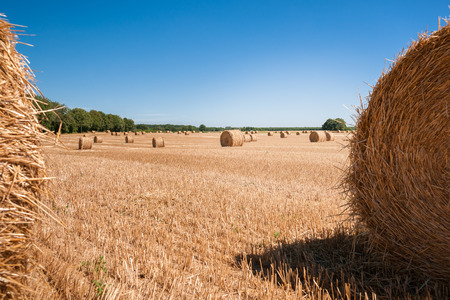 the loire: Round hay or straw bales in in countryside. Agriculture field after harvest. Summer at France, Loire.
