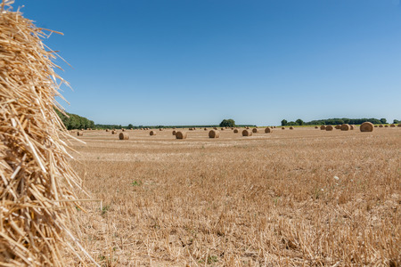 Round hay or straw bales in in countryside. Agriculture field after harvest. Summer at France, Loire.