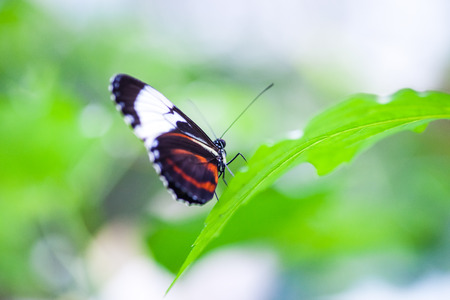 Tropical Butterfly in indoor garden Stock Photo