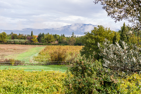 wine growing: provecale vineyards provence france french wine growing Stock Photo