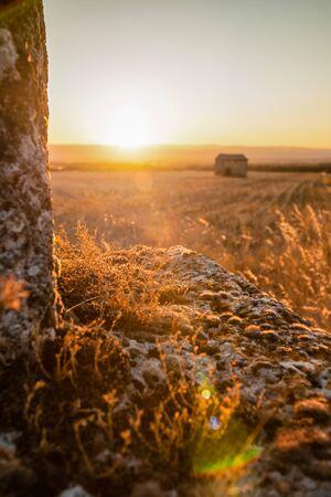 コケやフランスのローヌ渓谷の夕日とビューの光で強調表示された老朽化した記念碑の多肉植物