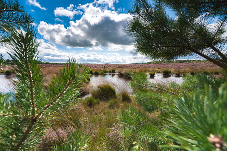 High grass along a water pool with wildlife tracks in the mud. Reflection in the water with Dutch white clouds in the sky, Veluwe, Heerde, Epe, Renderklippen. Stockfoto