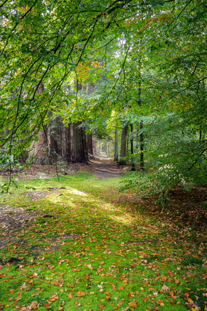 Unpaved forest road with sand, boulders and lush green leaves. The fall is slowly entering and the early morning fog of the autumn is still hanging between the trees. Foto de archivo