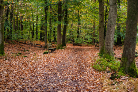 Carpet of autumn leaves with variegated colors cover the bottom of the forest. On the green branches and twigs hangs drops of rain falling in this wet forest allonga hiking path. Stock Photo