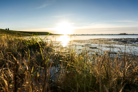 Frog's perspective of water surface with sunrise, flair and grass with water plants. Flowing water from a river with water plants in the Netherlands