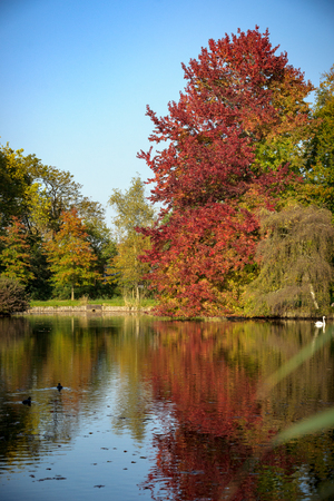 Paysage d'automne. Parc à l'automne. Les couleurs vives de l'automne au parc au bord du lac. avec cygne blanc, canards et soleil