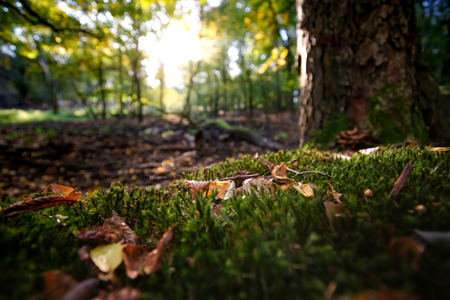 Radiant backlight shines through the trees on colored autumn leaves on fresh green moss Imagens