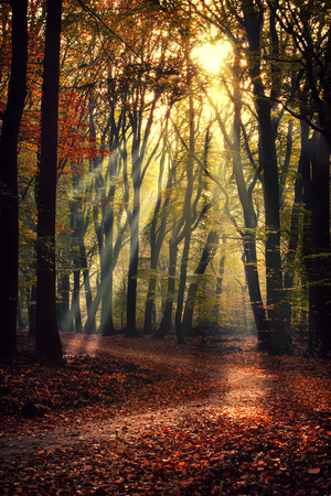 Scenery of Sprielderbos - one of the oldest and most beautiful forests in the Netherlands.