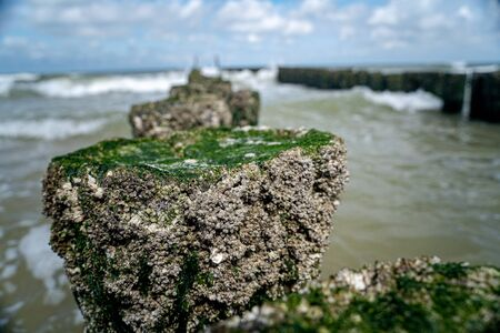 Barnacles are sea creatures that attaches themself to a jetty, rock formation or cement piles in water. Zdjęcie Seryjne