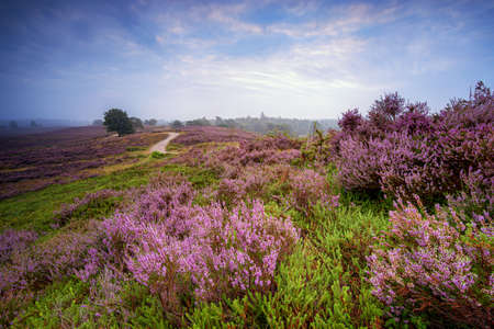Picturesque and colorful landscape in the Dutch National Park in the summer season.