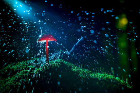 Theatrical illuminated macro photography with close up of fungus mushroom in the forest. Atmospheric baluw and red colors of flash light 免版税图像