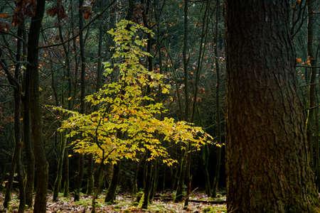 Autumn season scene with atmospheric nature details