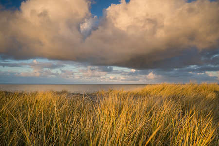 Waving dune grass with cumulus clouds above the North Sea coastline of the Netherlands 免版税图像
