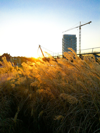 Reed in springtime with a tower and a crane in the background with the shinning sun
