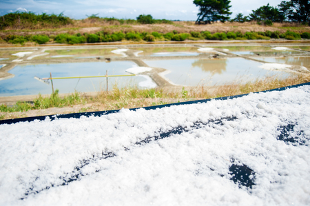 Table with drying salt on a Saline with water in summertime on the isle of Noirmoutier in France