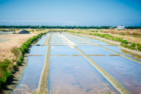 View on a Saline with water in summertime on the isle of Noirmoutier in France Фото со стока