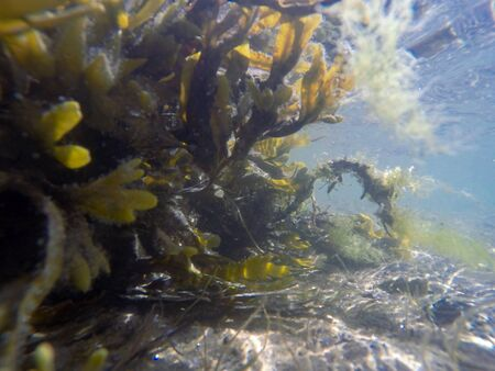 seaweed under water with sand and reflection of the sun in summertime