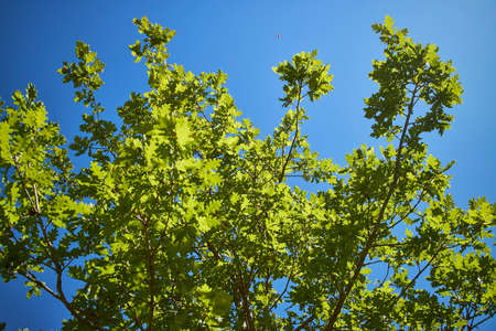 Closeup of green leaves on a tree and the bright blue sky