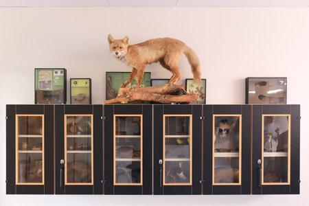 a taxidermy fox on a shelf in biology classroom