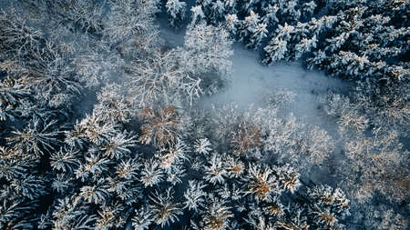 forest in winter covered in snow wallpaper