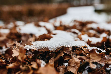 brown dried leaf in snow on ground