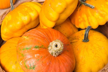 single orange pumpkin lie in a wooden basket with yellow pumpkins