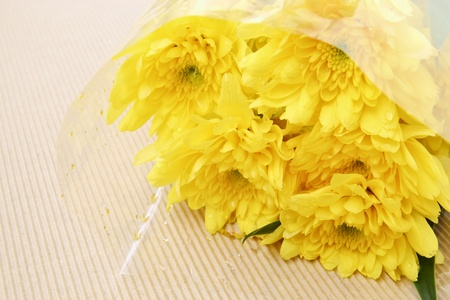 Yellow Chrysanthemum in the bouquet Stock Photo - 13016986