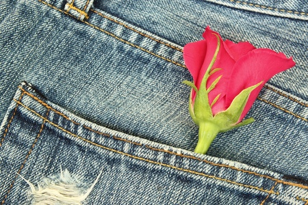 Rose in the jeans pocket  Stock Photo - 13016341