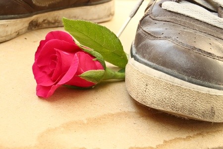 trample: Shoe trample rose; love and heartbroken concept  Stock Photo