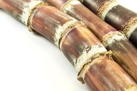 sugar cane with white background photo