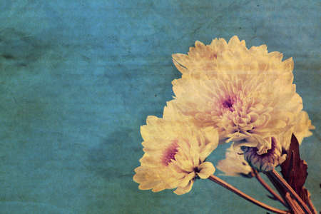 celulosa: Textura de papel cartón sucios