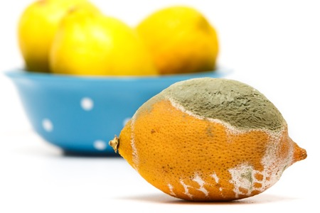 Spoiled lemon with fungus on white background.