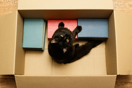 Cat sitting in a box with books