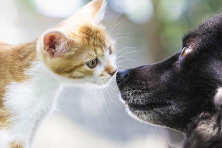 Amistad de un gatito rojo y un perro