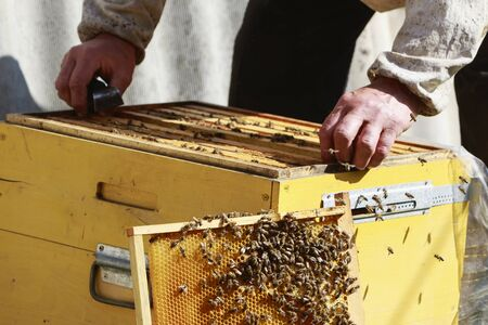 The beekeeper holds a honeycomb frame with honey and bees in the apiary