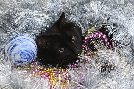 Portrait of a cat in Christmas toys