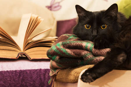 Attentive black cat with open book.