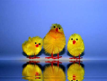 reflexion: Tres fledglings con Reflexion