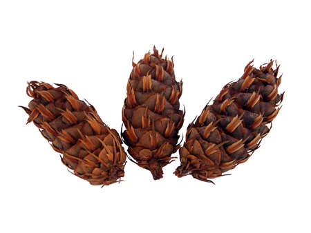 exempt: Three exempt conifer plugs as a decoration