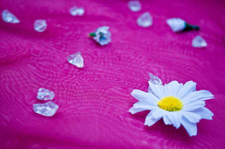 kamille: Bright light with crystals and flowers