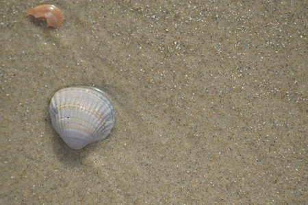 Shell dans le sable Banque d'images - 72185395