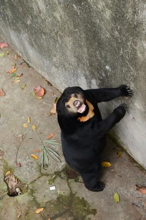 sloth: Perezoso divertido en zoopark en Tailandia