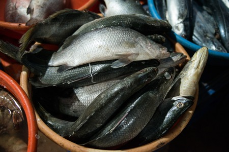 cancers: Seafood at the local market in Goa, India Stock Photo