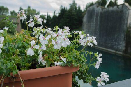 Nature of Garda lake in Italy, Europe Stock Photo