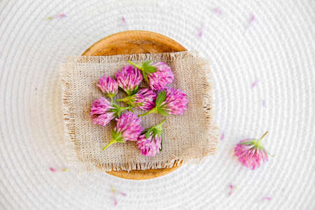 Trifolium pratense the red clover harvested flower heads on vintage cloth on white background. Stock fotó