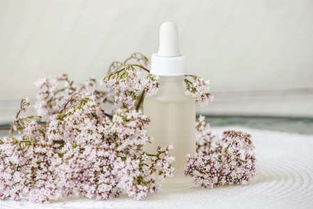 Valerian or Valeriana officinalis tincture bottle with pink small Valeriana plant blossoms. Calming organic medicine or beauty product concept. White minimalist background with copy space. Stock Photo