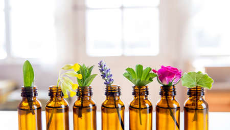 Selective focus lot on fresh herbs in small vintage bottles in a row. Essential oil concept. Blurred white window with glowing daylight background. Lavender, rose, cowslip, lady's mantle, peppermint.