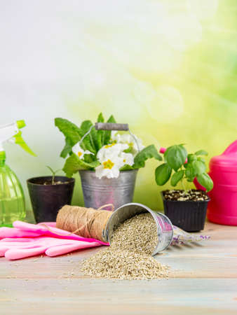 Mixing vermiculite granules pellets with black gardening soil improves water retention, airflow, root growth capacity of all the plants growing in pots. Different gardening tools on the background.