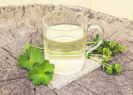 Alchemilla vulgaris, common lady's mantle medicinal herbal tea concept. Composition on natural wooden background.