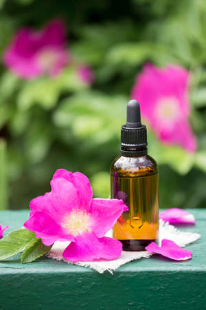 Rose hip( Rosa rugosa, beach rose, Japanese rose) petal oil concept. Brown dropper bottle with scattered pink petals outdoors with lush rose hip bush blossoming background.